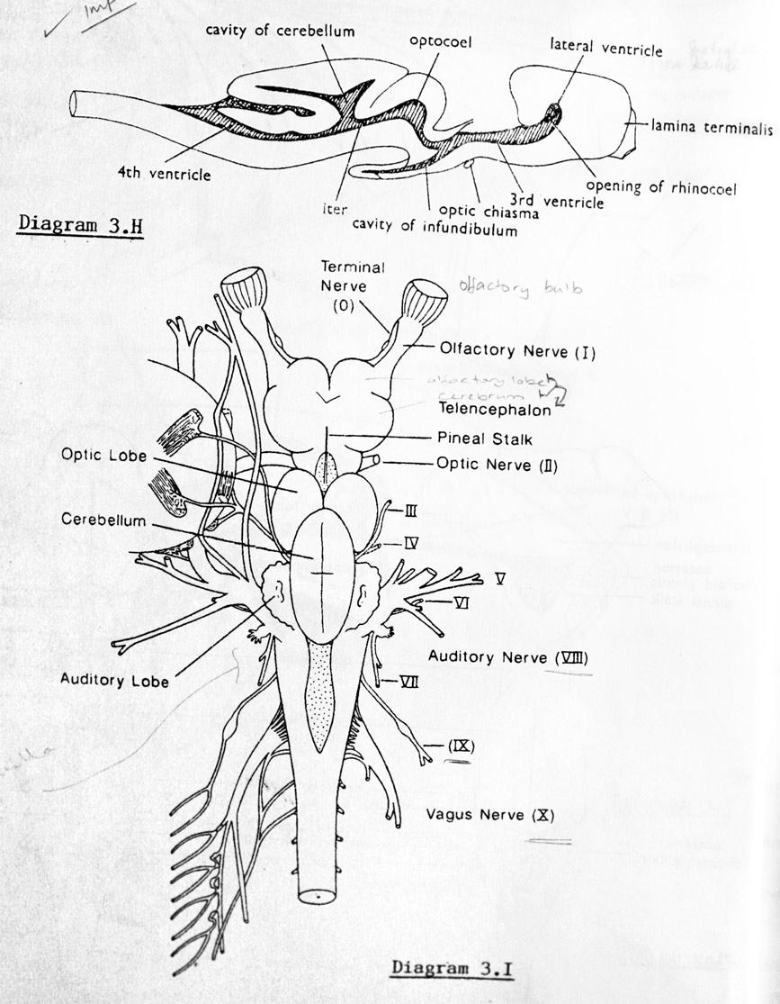 Shark brain old lab manual drawing 77 31508 412 pm shark brain old lab manual drawing ccuart Gallery
